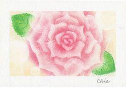 (StepUp講座)薔薇アート